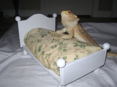 bearded dragon bedding bearded dragon bed with mattress