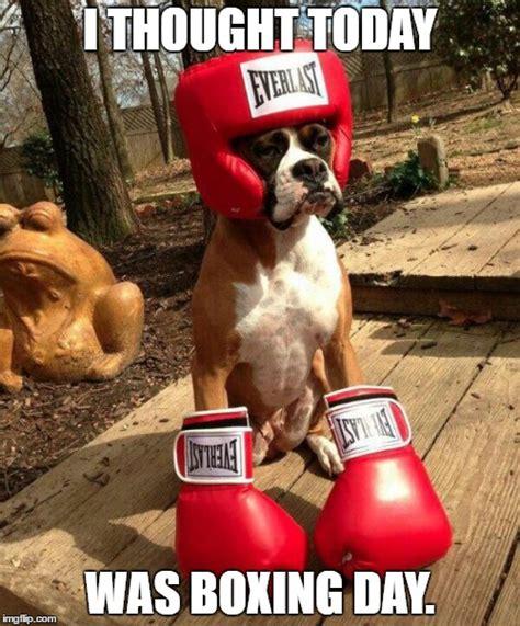 Boxing Day Meme - boxing imgflip
