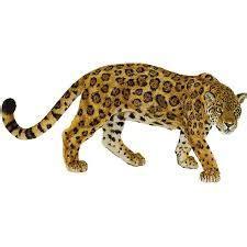imagenes jaguarete yaguaret 233 para colorear buscar con google poras