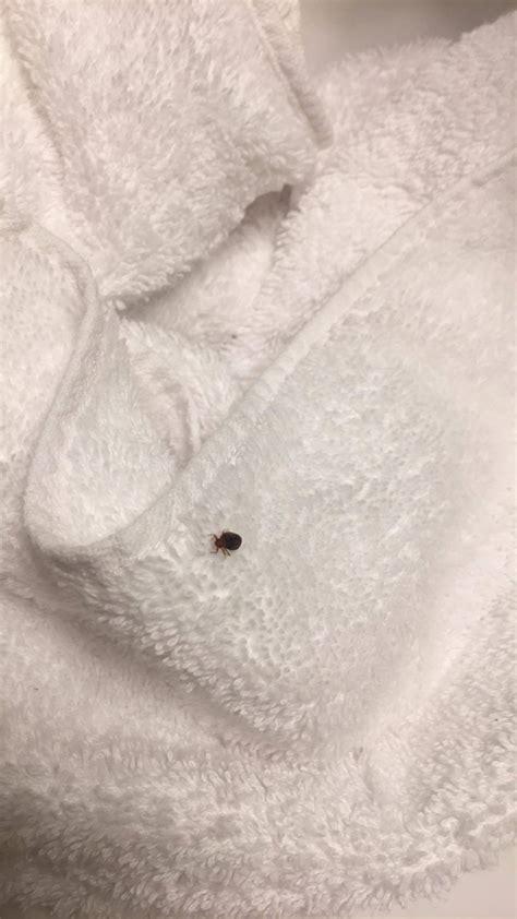 Bed Bug Hotels Mississippi