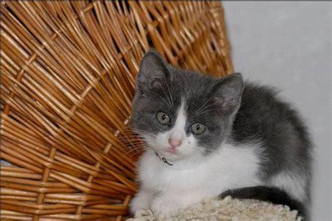 pin by fotas aiken on adoptable cats pinterest