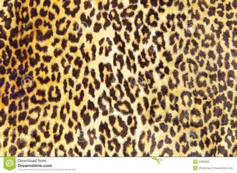 leopard pattern image leopard pattern stock photography image 2462502