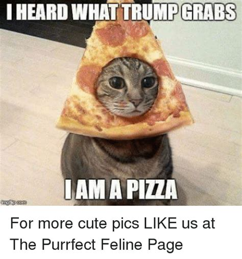 Meme Cute - iheard what trump grabs ama pila for more cute pics like us at the purrfect feline page cute
