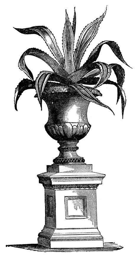 house plant images victorian  graphics fairy