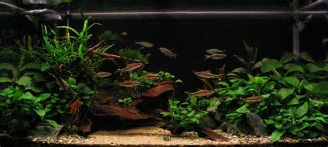 aquascape anubias aquascaping world competition gallery anubias paradise