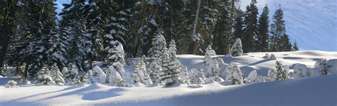 in snow file trees covered by snow in boreal california jpg wikimedia commons