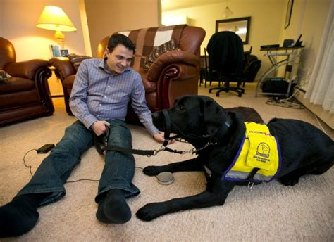 service dogs for epilepsy service dogs allow disabled to keep independence