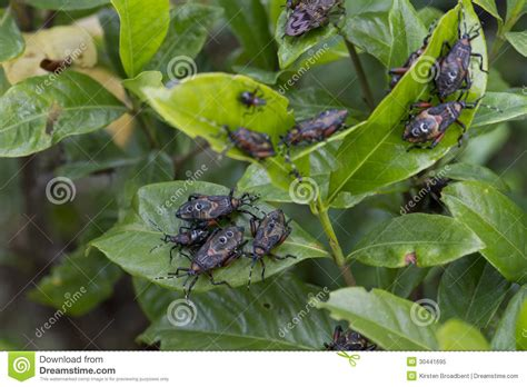 garden worms pests garden pests royalty free stock photo image 30441695