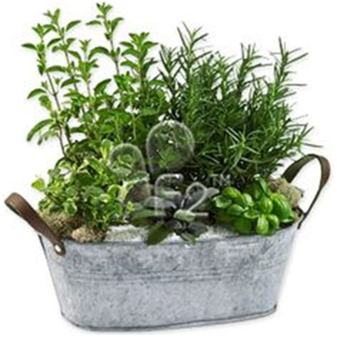 indoor wall herb garden 20 ways to start an indoor herb diy starting an indoor herb garden