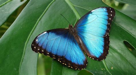 farfalla nera in casa significato simboli e significati della farfalla tra mitologia ed