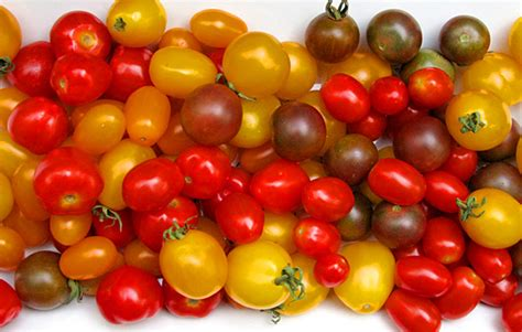Tomat Multi Color seed to feed me how do you when tomatoes are ripe to