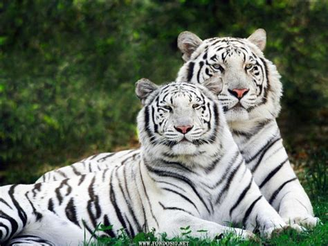 fotos animales fondo de pantalla solo fondos de pantalla gt animales