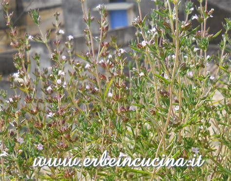 santoreggia in cucina erbe in cucina fiori di santoreggia