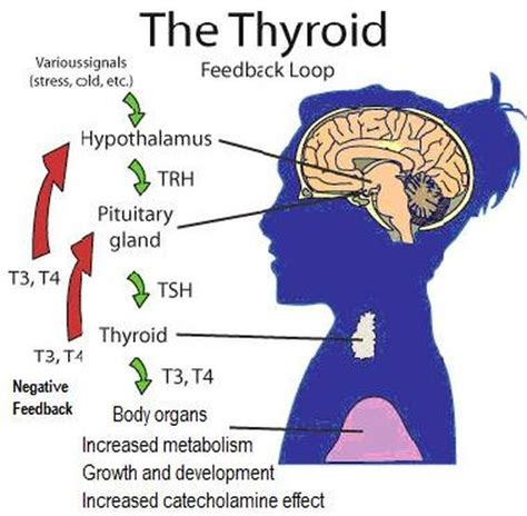 does hypothyroidism cause mood swings answers biology 30 case study the thyroid