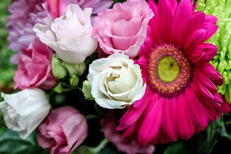 fiori lisianthus free photo lisianthus flower flowers white free