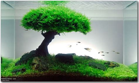 How To Set Up An Aquascape by Freshwater Aquascape Bonsai Aquarium By Takashi Amano
