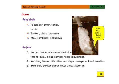 Obat Hewan Anti Protozoa Coxymas kambing boer