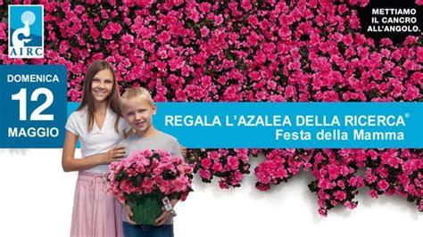 Malattie Azalea Da Esterno by Azalea Della Ricerca Per La Festa Della Mamma 2013