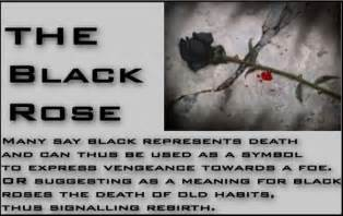 black rose meaning celtic akasha pinterest black