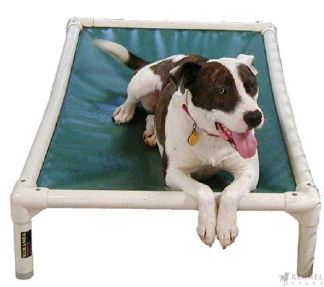 kuranda dog bed kuranda chew proof raised dog beds