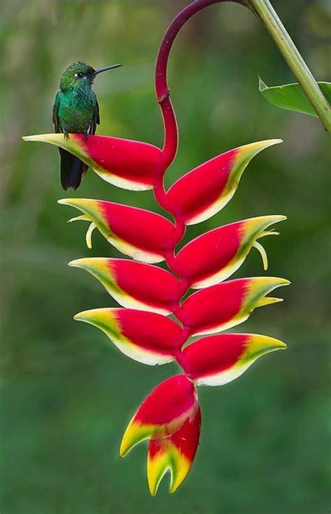 imagenes flores pinterest 25 melhores ideias sobre flores no pinterest lada