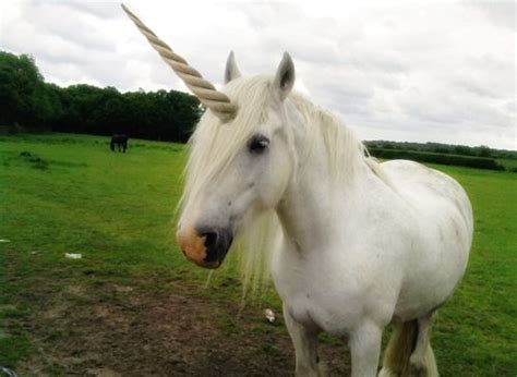 real life unicorn unicorns are real pinterest pets ha ha and all things