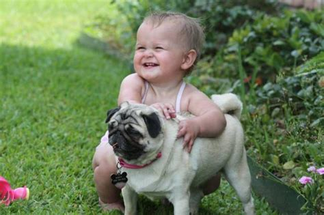 dogs with babies baby with the vodafone xcitefun net