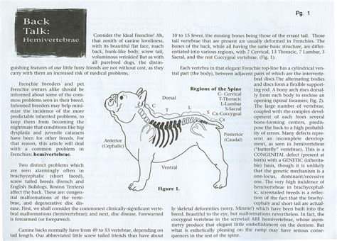 torbutrol for dogs bulldog spines