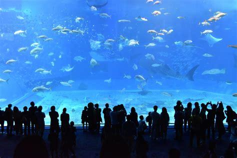 quanto costa l ingresso all acquario di genova acquario di genova come raggiungerlo e dove parcheggiare