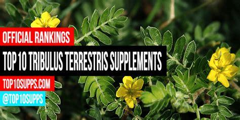 best tribulus supplement best tribulus terrestris supplements top 10 for 2017