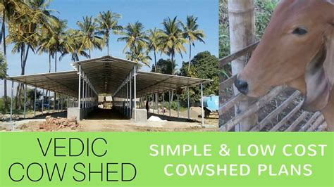 Wonderful Post Modern Home Plans #8: Cowshed-Cow-Dairy-Farming.jpg