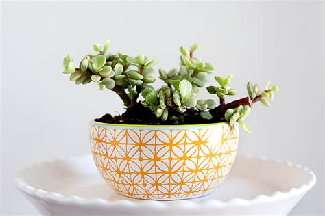 cute succulents cactus and succulent gift ideas eighteen25