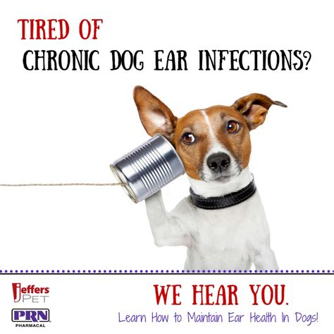 chronic ear infections in dogs tired of chronic ear infections stop them now jeffers blogs