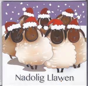 nadolig llawen sheep 6 pk of christmas cards pend