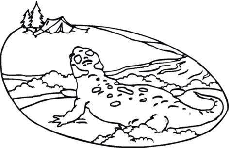tiger salamander coloring page spotted salamander coloring page coloring pages