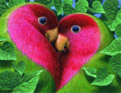 koleksi gambar burung  cantik