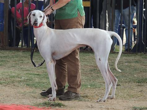 indian breeds top breeds to pet pet attack