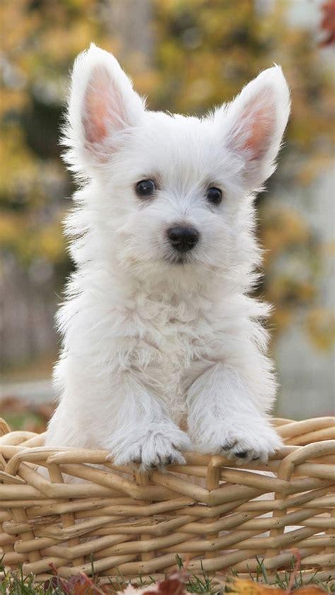 cute dogs  puppies wallpaper wallpapertag