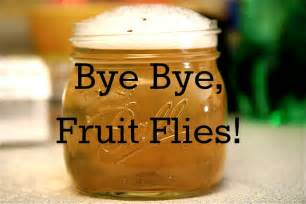 how to get rid of fruit flies suburban turmoil