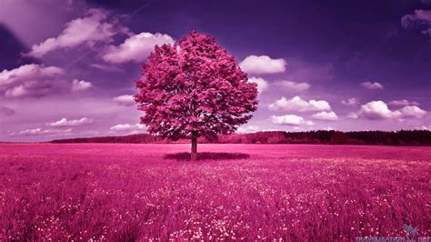 wallpaper pink trees women track and field pink tree 399559 jpg 1920 215 1080