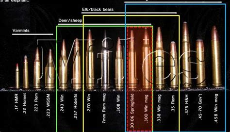 rifle bullet caliber size chart pictures to pin on