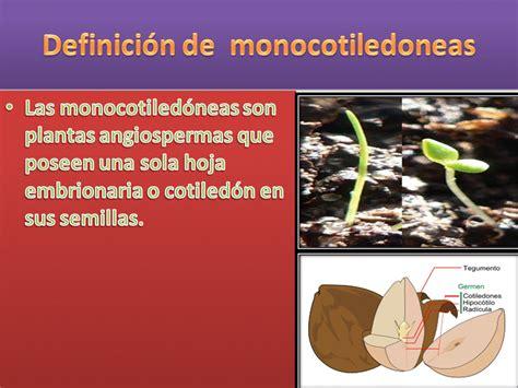 olguchiland las plantas ii monocotiledoneas plantas monocotiledoneas