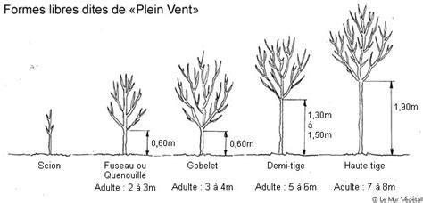 scion plant definition le scion 171 pr 234 t 224 planter