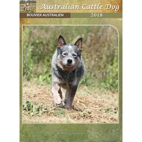 2018 cow dogs calendar stoecklein photography calendar australian cattle dog 2018