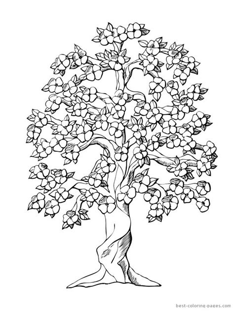 free coloring pages of cherry blossoms