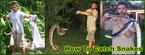 how to catch a snake in the house snake removal and control