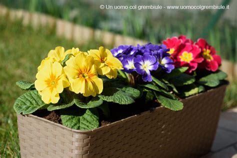 fiori da piantare in primavera fiori da piantare in giardino a primavera