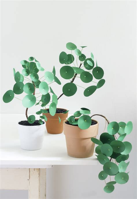 Paper From Plants - paper pilea 2 0 the apple of my diy