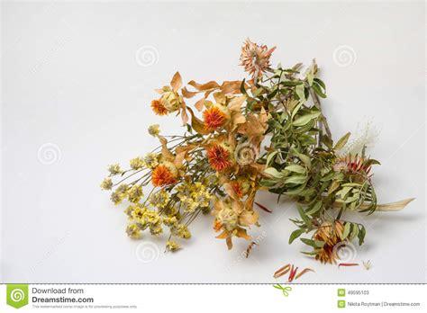 sognare un mazzo di fiori mazzo di fiori appassiti gpsreviewspot
