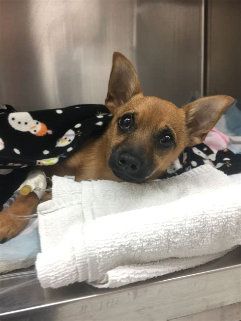 normal puppy rate puppy who overdosed on heroin makes a recovery